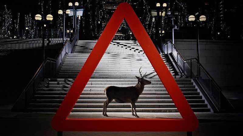 Range Rover Evoque Wild Animal Sign